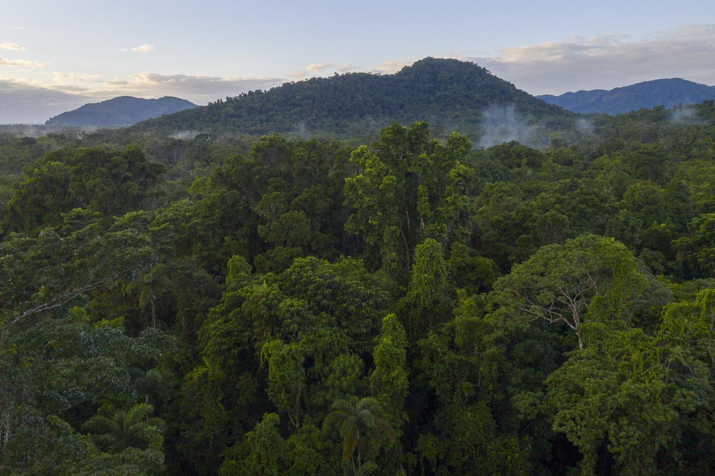 Lowland Rainforest: Image by Steven Nowakowski