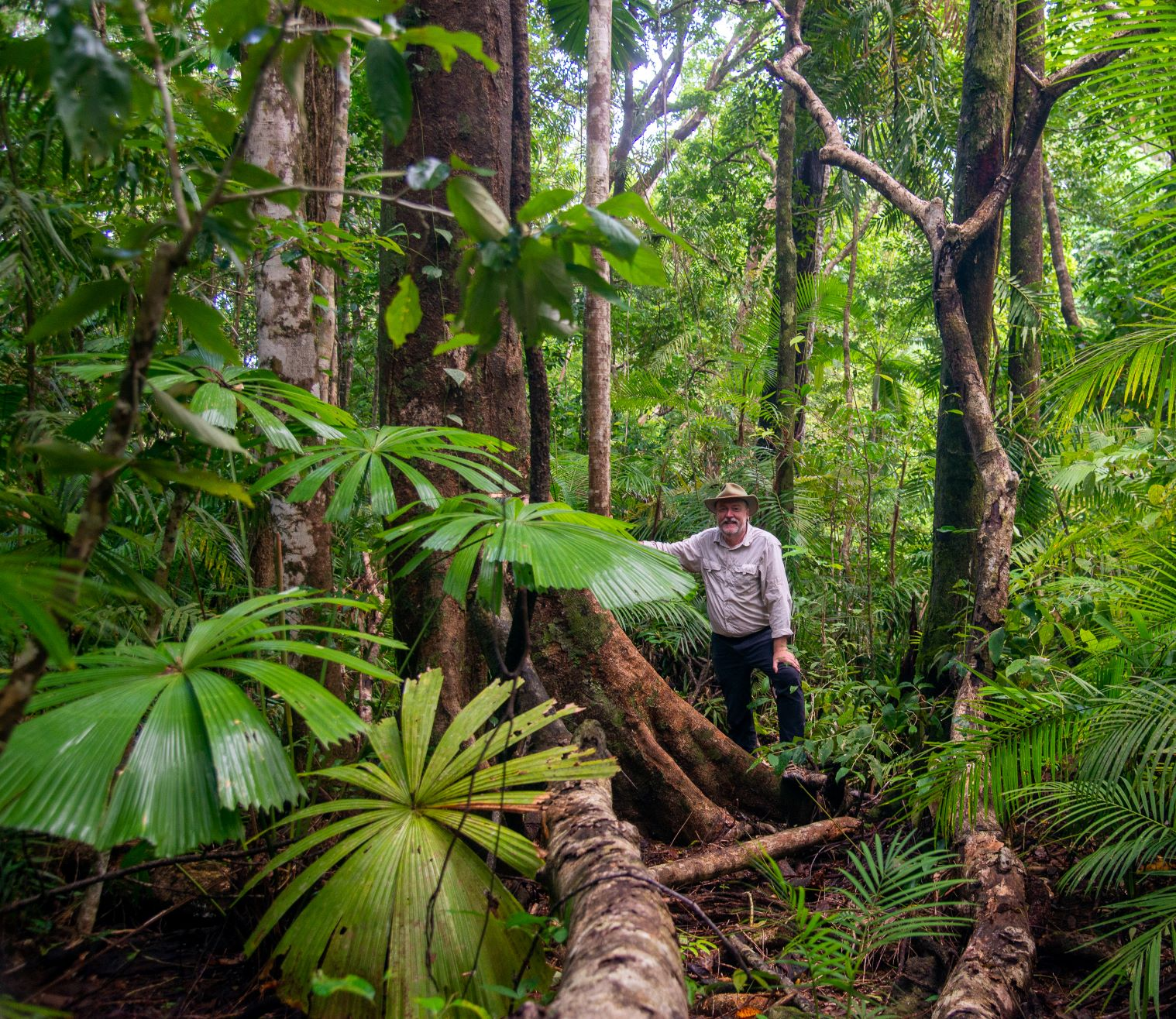 Old-growth tropical rainforest in the Daintree