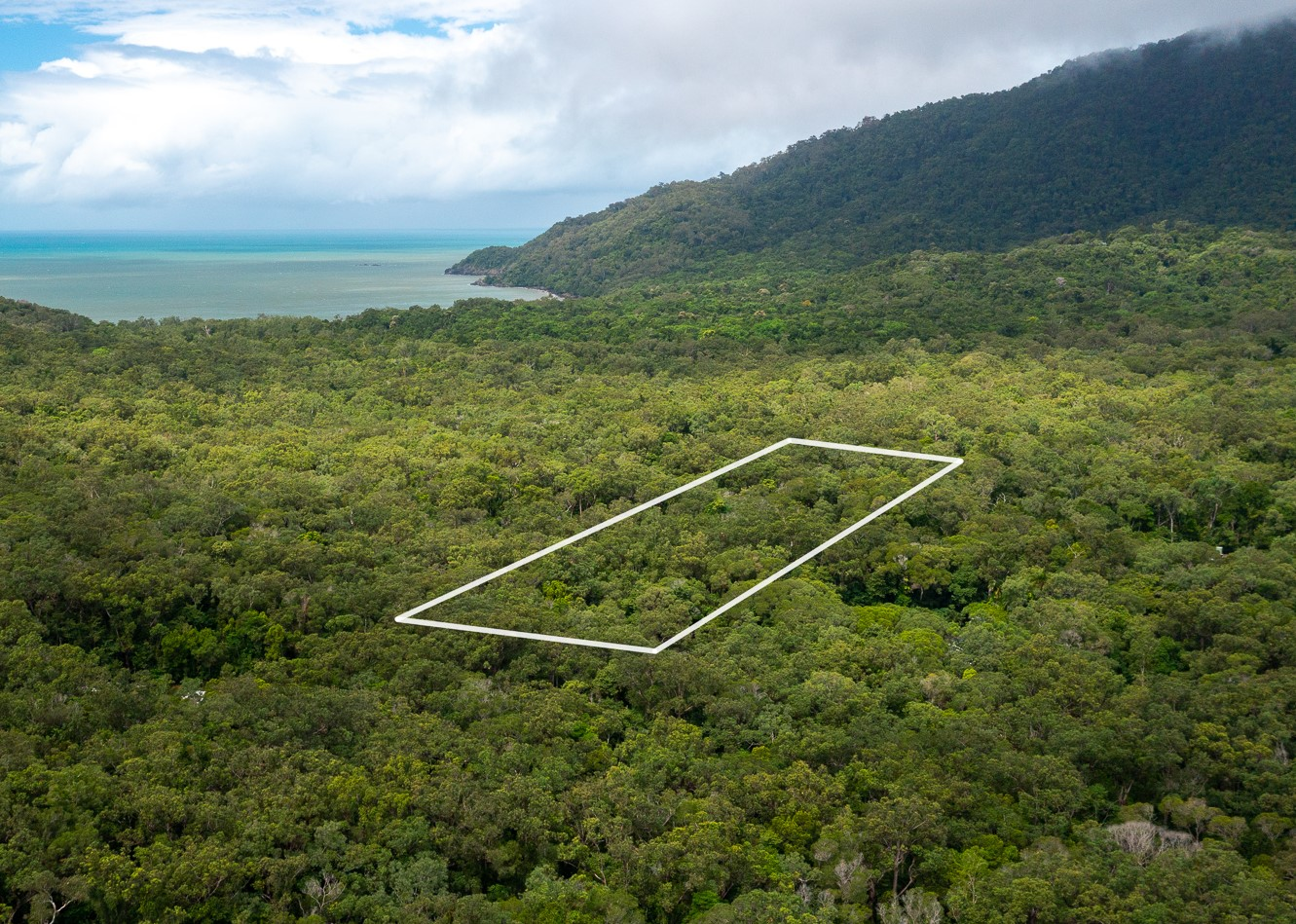 Lot 213 Teak Roadin the Daintree Lowland Rainforest