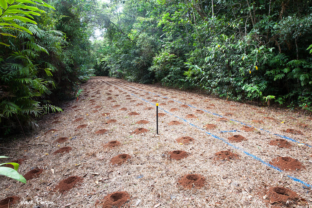 Road closure in the Daintree Lowland Rainforest