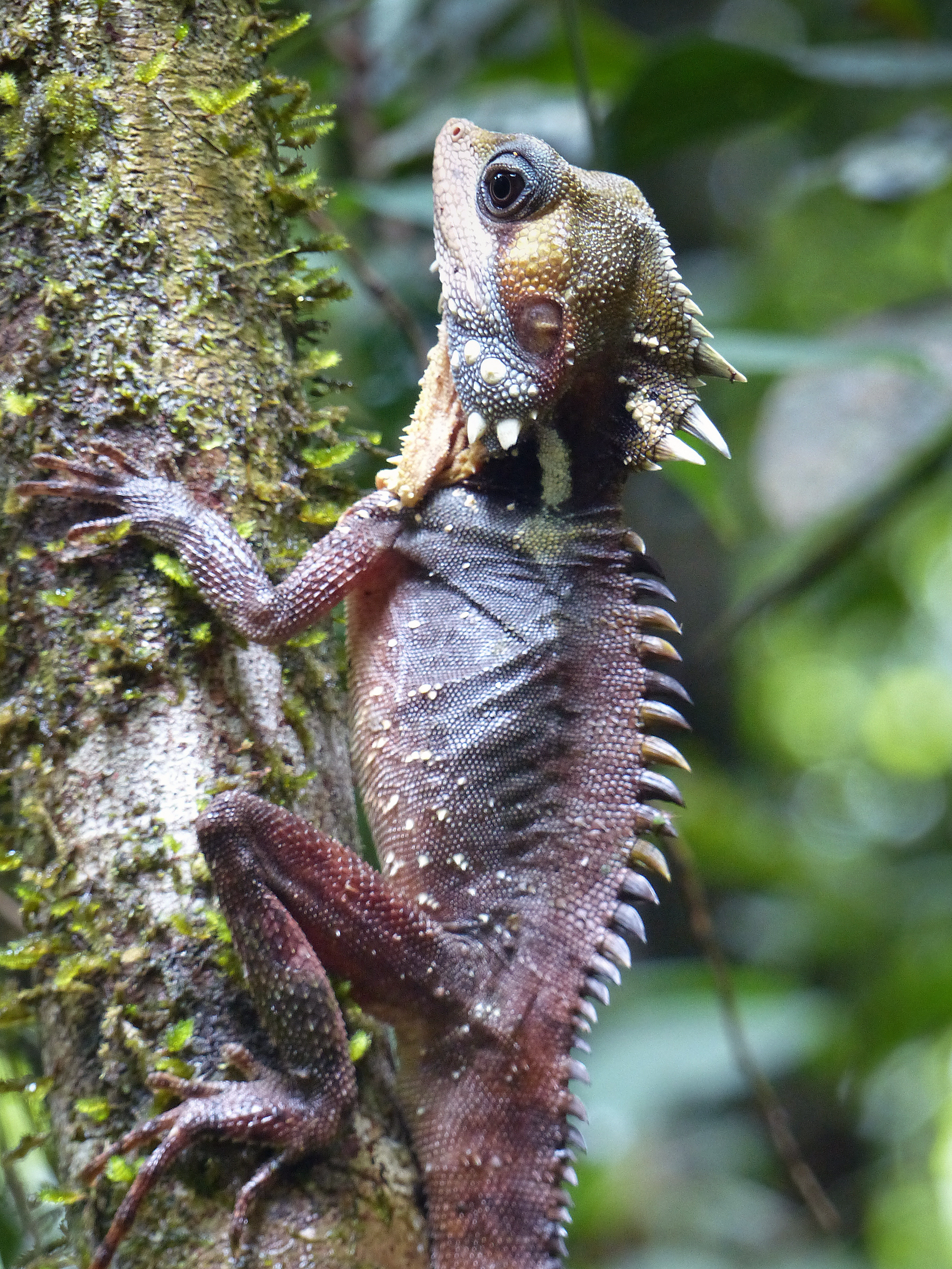 Boyds Forest Dragon: Pic by Connie Kerr
