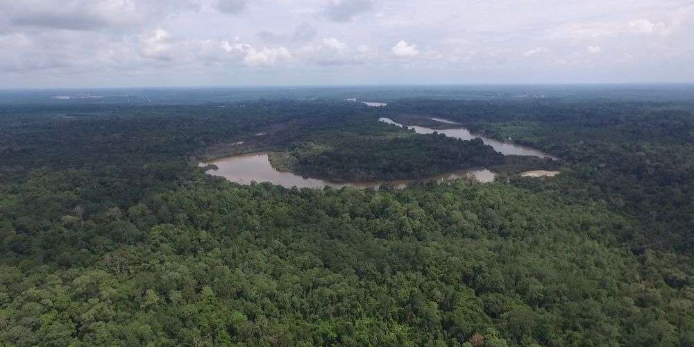 The Dulan Rainforest is threatened by expanding oil palm plantations