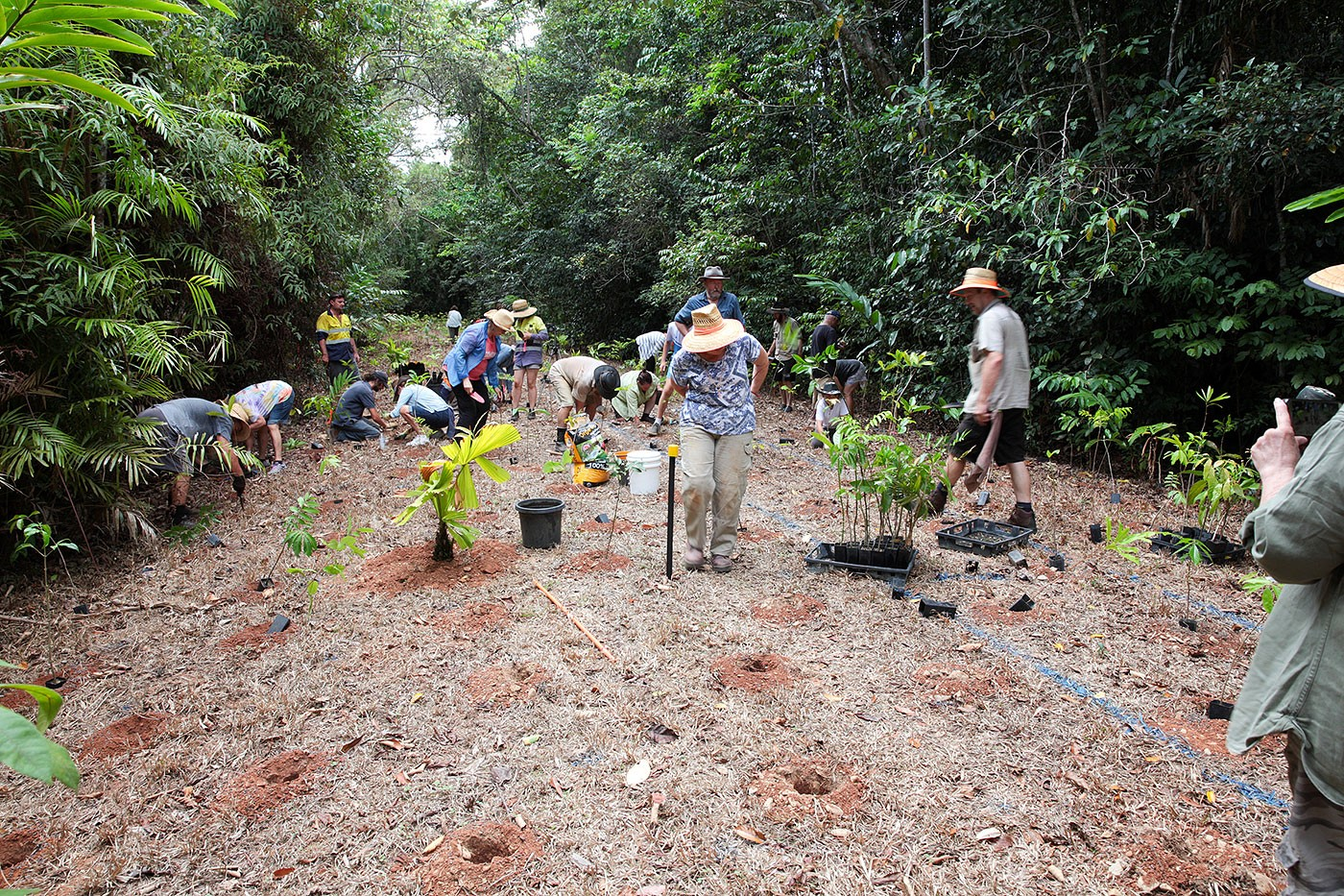 Daintree Rainforest tree planting