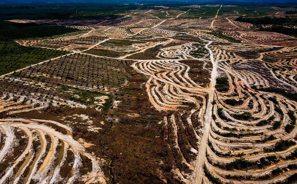Destruction of rainforest in Kalimantan for oil palm plantations