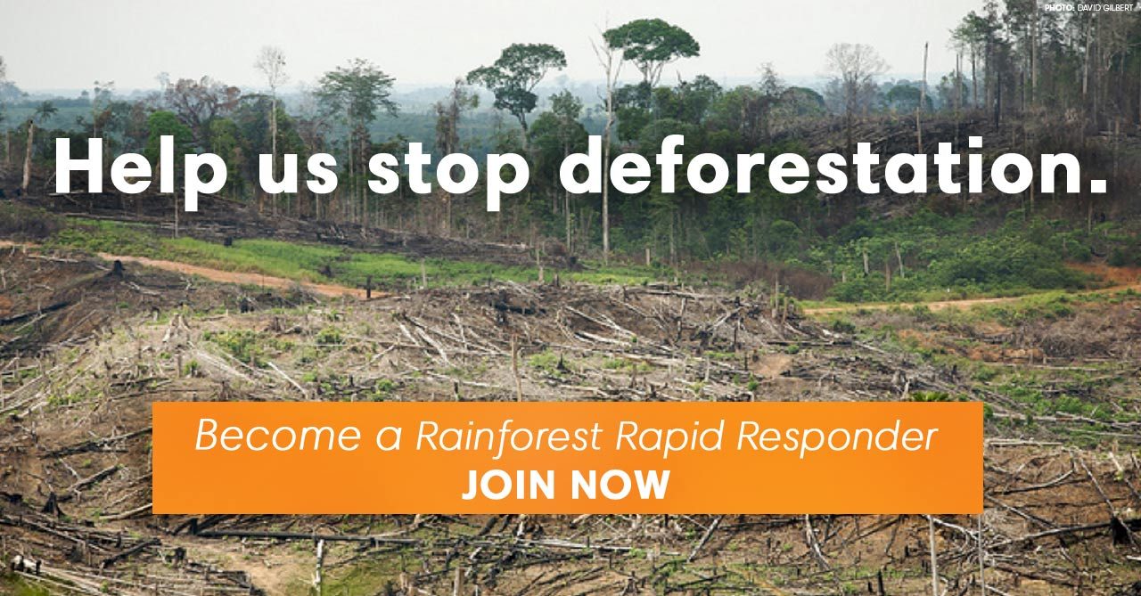HelpStopDeforestation.jpg