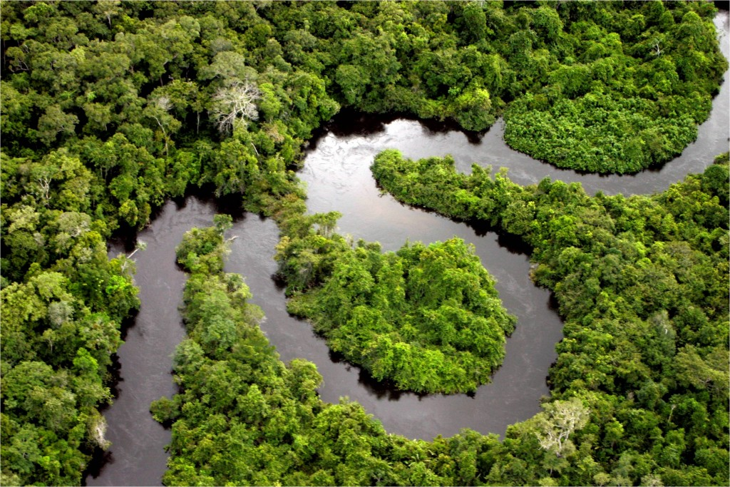 Rainforest : Photo by Leonard Freitas