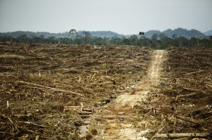 Oil palm plantations destroy globally important rainforests
