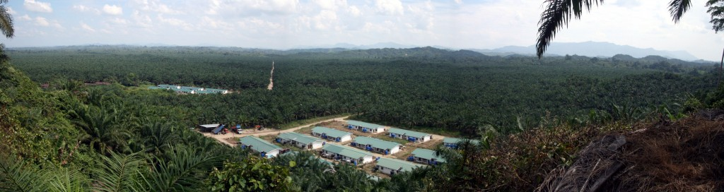 IOI Pelita Palm Oil Operations in Sarawak, Malaysian Borneo. Photo:Eric Wakker