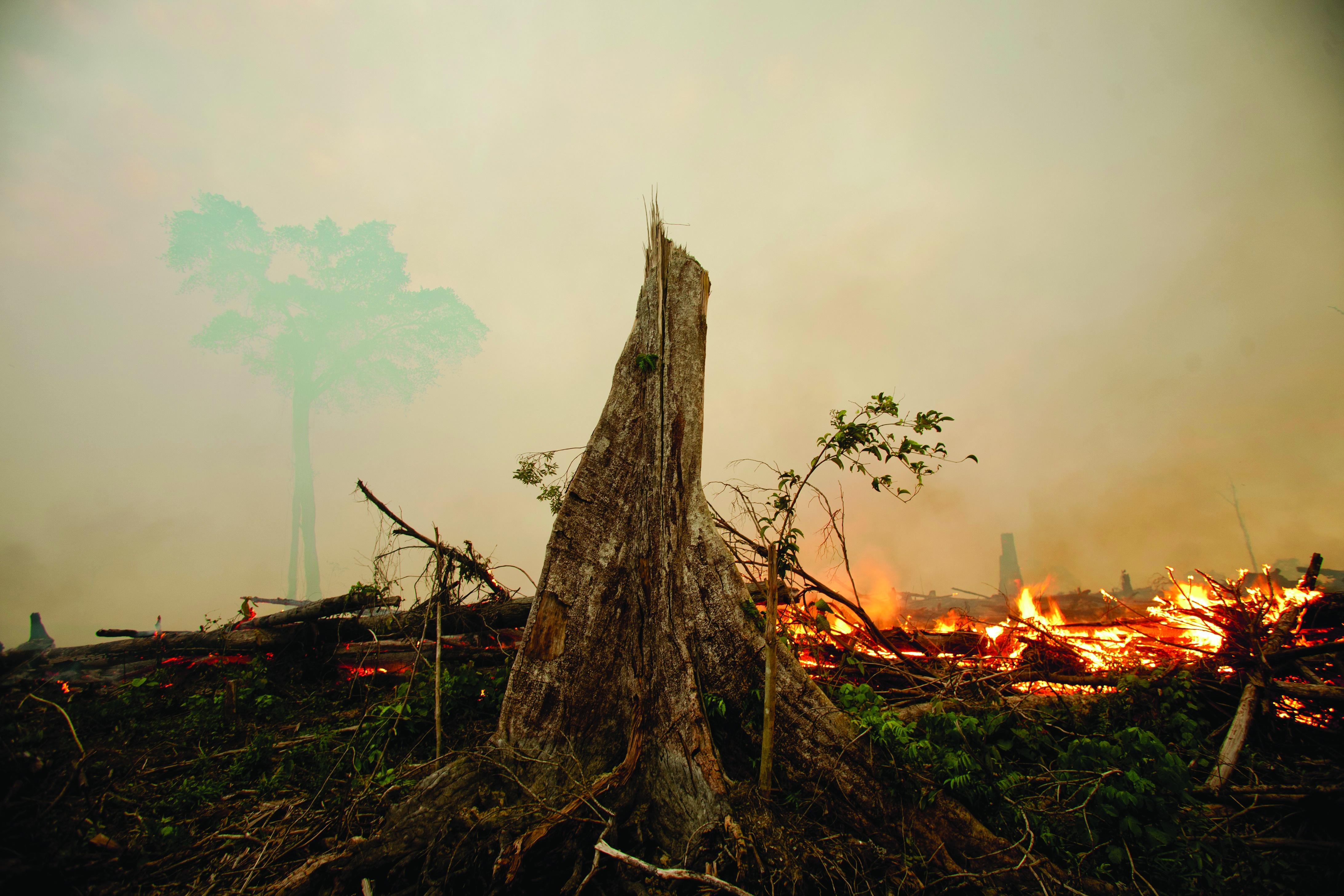fire_haze_rainforest_(2).jpg