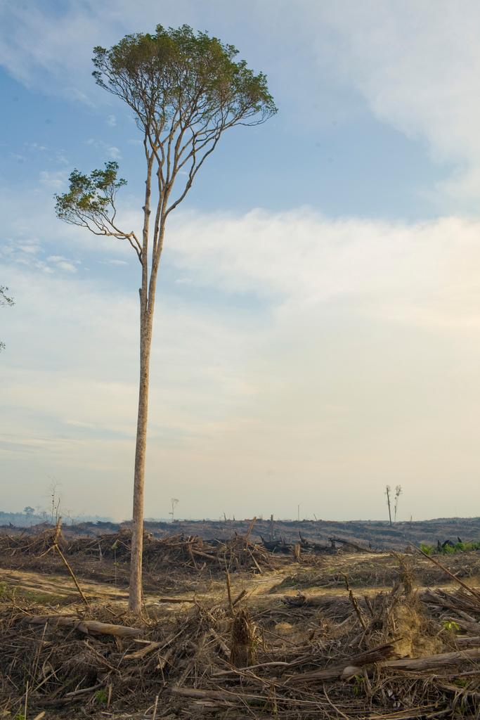Cargill clearcut