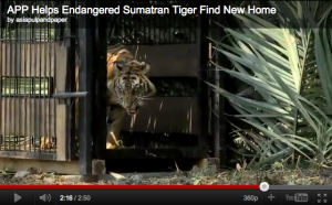 Still of APP Tiger Video