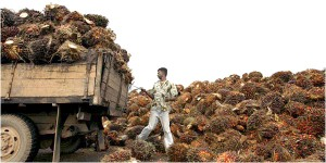 Palmoil-delivery-to-a-Malaysian-Mill.-NYT