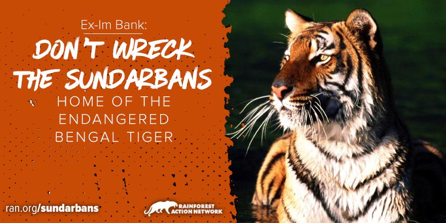 Sundarbans_Bengal_Tiger.png