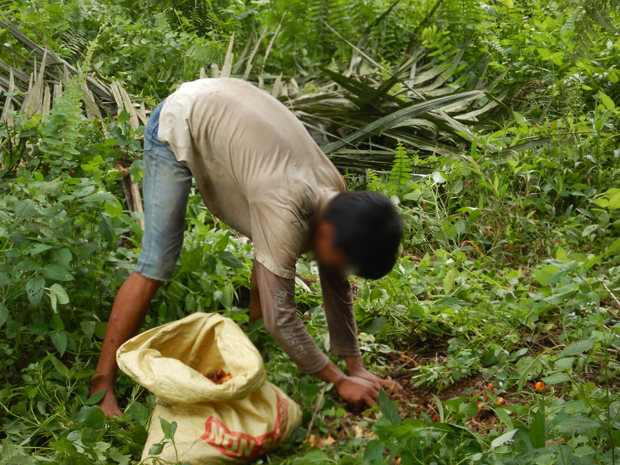 Workers Rights, Labor Rights & Palm Oil