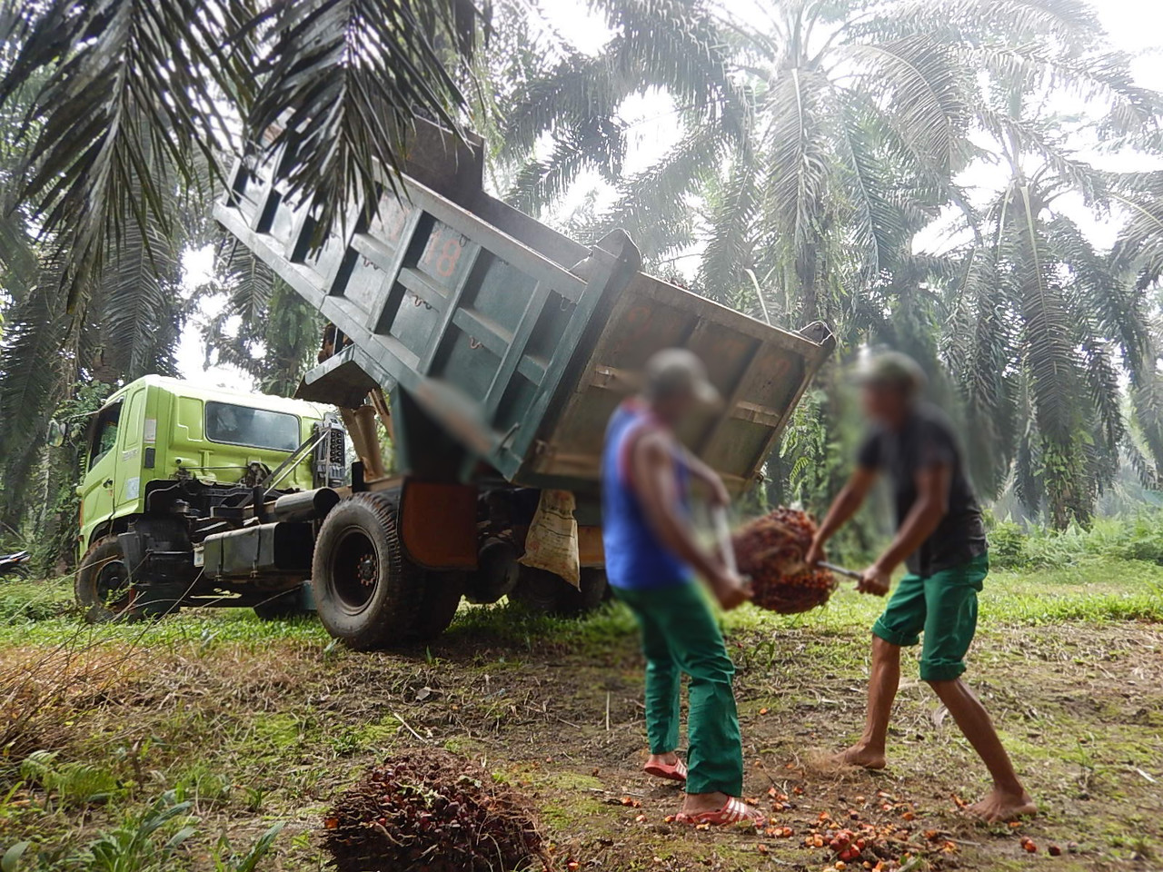 Workers' Rights, Labor Rights & Palm Oil