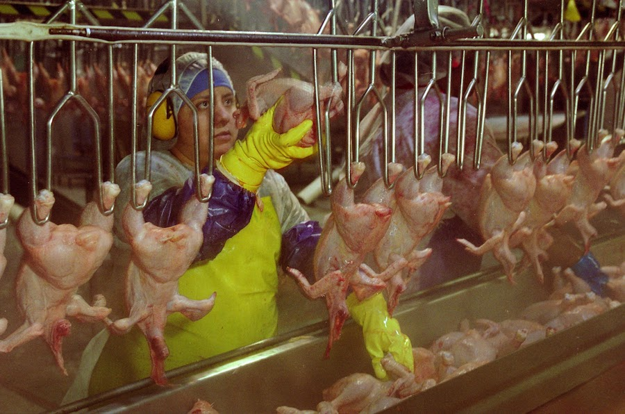 Woman_on_Poultry_Processing_Line_EarlDotter_Tyson6.jpg