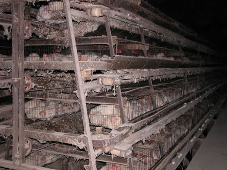 tyson foods brings conflict palm oil and factory farmed meat to industrialproduction battery cage tyson3 jpg