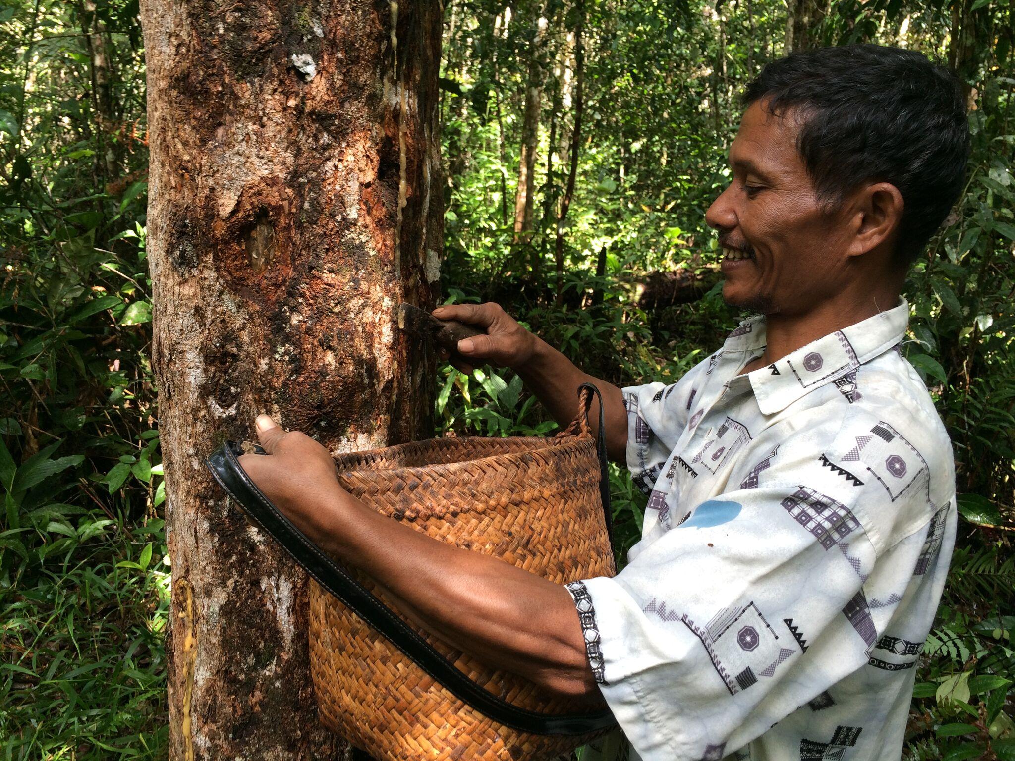 Community member farming in Pandumaan-Sipituhuta