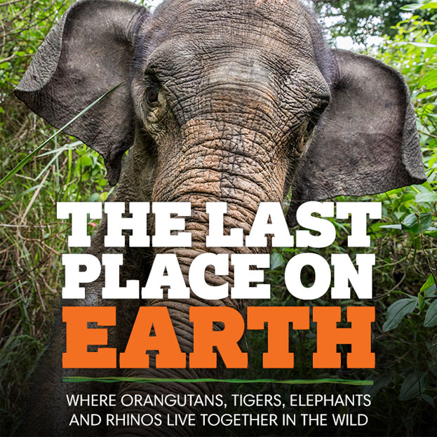 The Last Place on Earth - Where Orangutans, Tigers, Elephants and Rhinos live together in the wild.