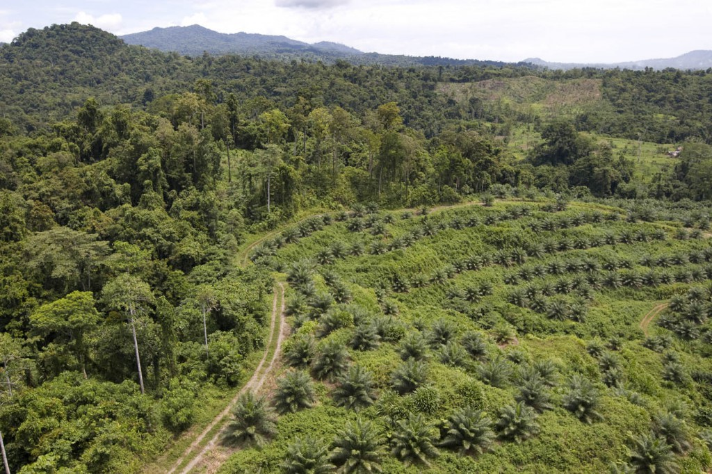 A Cargill oil palm plantation in PNG - Photo by Greenpeace