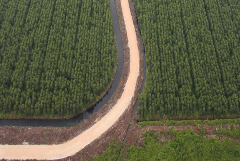 Hutan Tanaman Industri (HTI) perusahaan pulp dan kertas raksasa PT Asia Pulp & Paper (APP) di Semenanjung Kampar di Sumatera