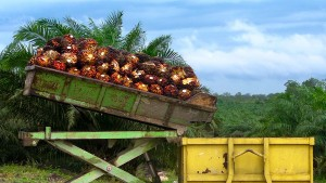 According to the US Department of Labor the Cultivation of Palm Oil in Some Countries Relies on Slave Labor