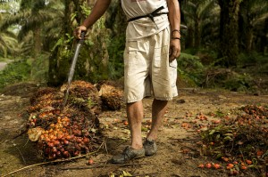 Palm oil day laborer in Sumatra