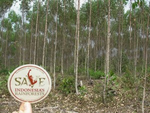 Save Indonesia's rainforests
