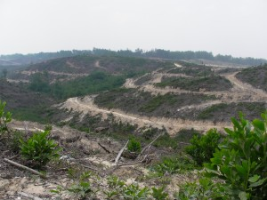 Indonesia rainforest destruction