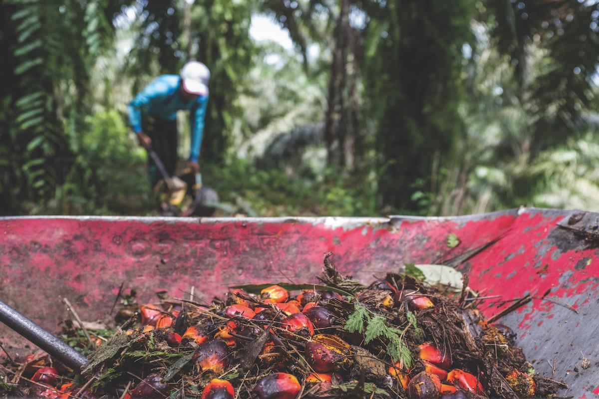 farmer_plus_palm_oil_pile.jpg