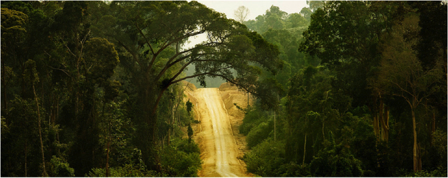 forests_indorainforests_883x352.png