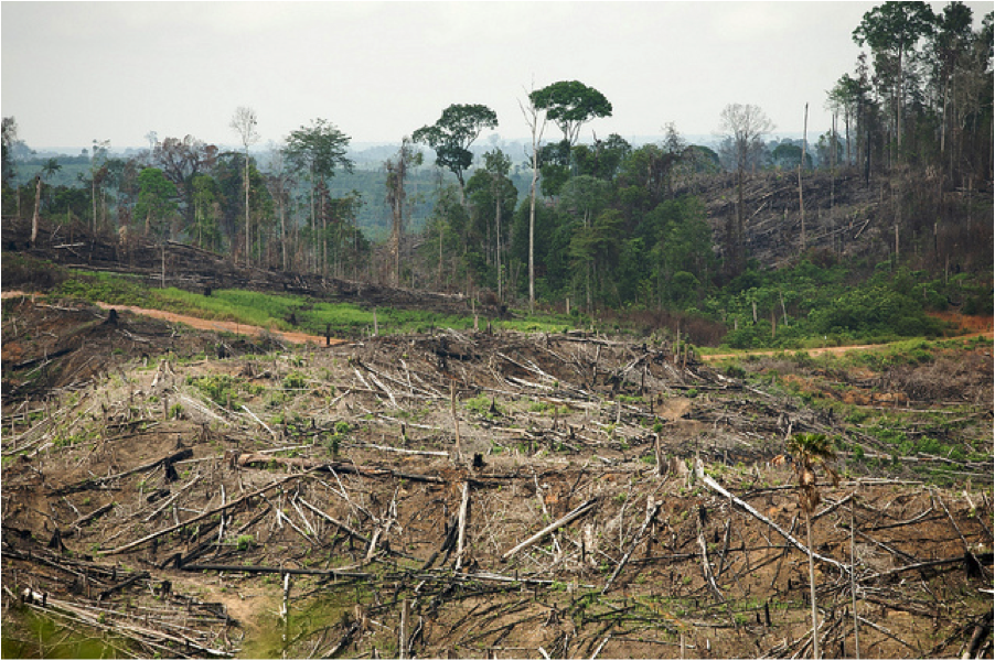 destruction of the rainforest Reports have shown that the amazon rainforest is being destroyed at a very  speedy rate, and people might not be able to do anything to save.