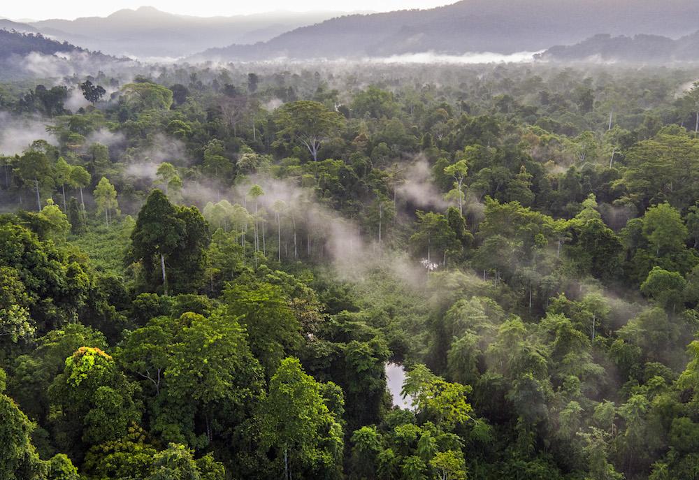 Saatnya Bertindak Mendukung Perlindungan Kawasan Ekosistem Leuser