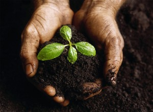 Occupy our Soils, Occupy our Food Supply. Photo via http://nocostl.com/