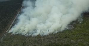 Tripa burning
