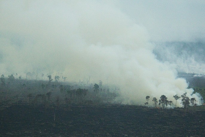 Tripa Peat Forest ablaze