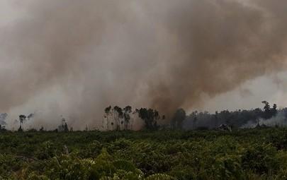 Fire in Tripa