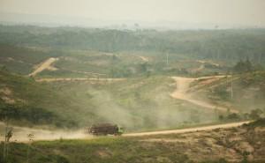 Indonesia deforestation_565_350