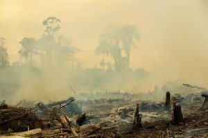 A Duta Palma-owned palm oil plantation in Indonesian Borneo (Kalimantan). Until Cargill adopts supply chain safeguards and publicly discloses its supposed 'No Trade List,' this rainforest destruction will persist in its palm oil supply chain. Photo: David Gilbert