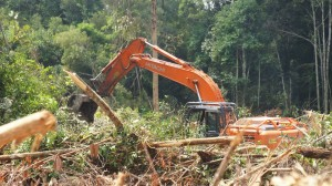 A Bumitama clearcut underway. Photo: The Centre for Orangutan Protection