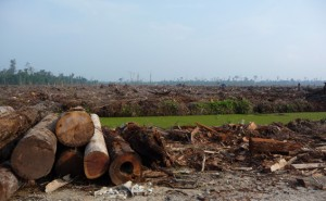 rfp_app_deforestation_565x350