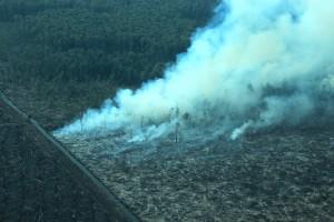 Illegal Fires in Tripa Blazing Again. Photo: www.EndofTheIcons.wordpress.com