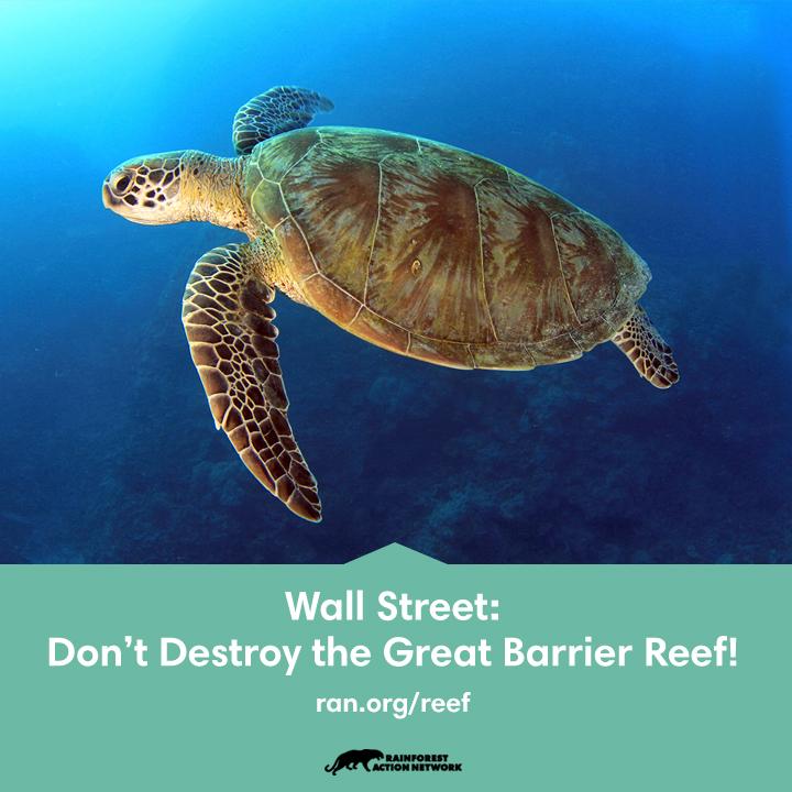 Reef_720x720.jpg