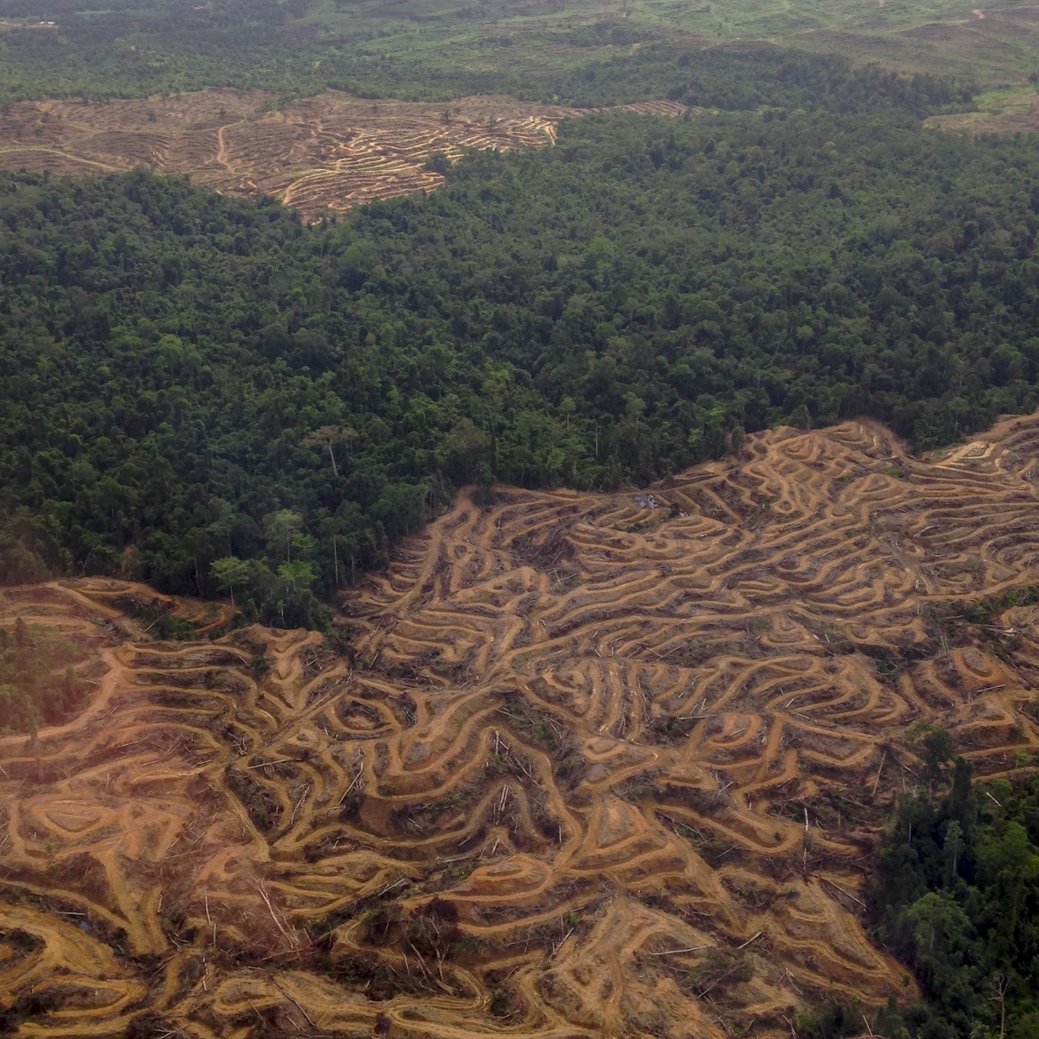 LeuserEcosystemDeforestation_June2015.jpeg