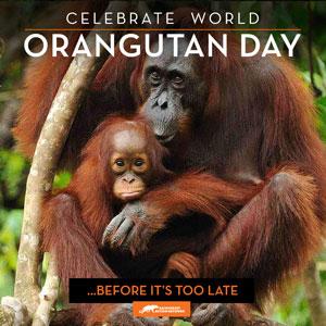 WorldOrangutanDay_v2-optimized.jpg