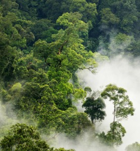 The Leuser Ecosystem - Photo by David Gilbert