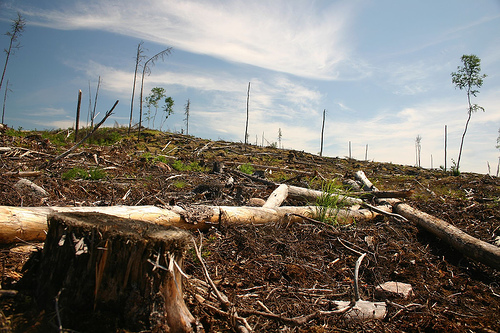Clearcut on Grassy Narrows Land