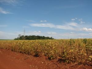 Soy plantation in Alto Parana, Paraguay