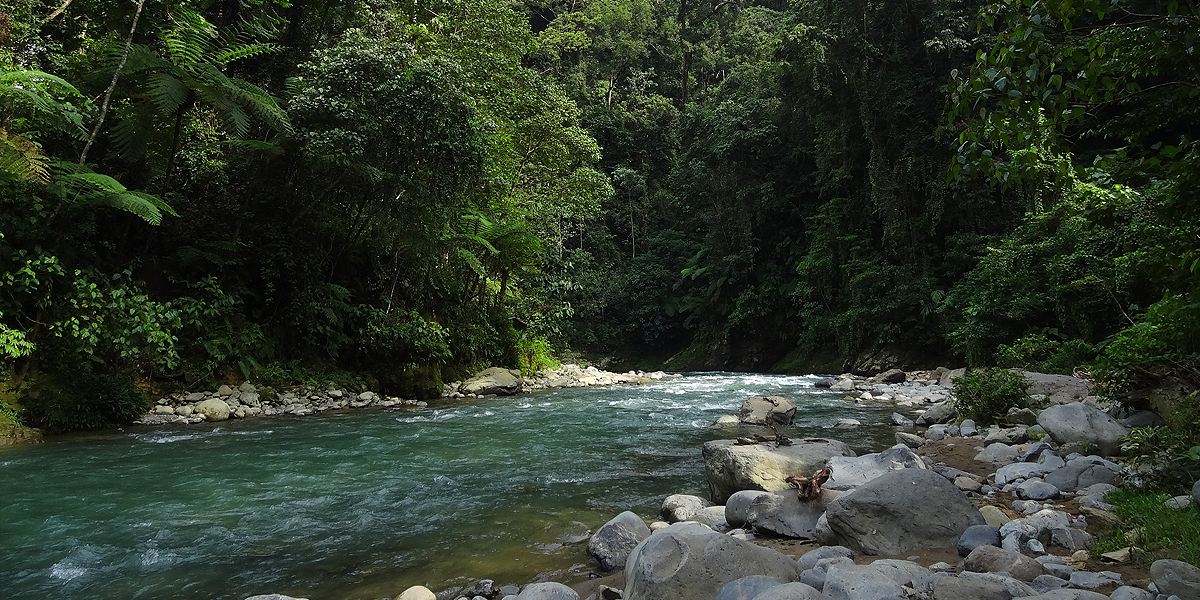 Don't Bag Indonesia's Rainforests