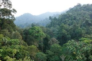 Bukit Tigapuluh, Sumatra. Credit: David Gilbert